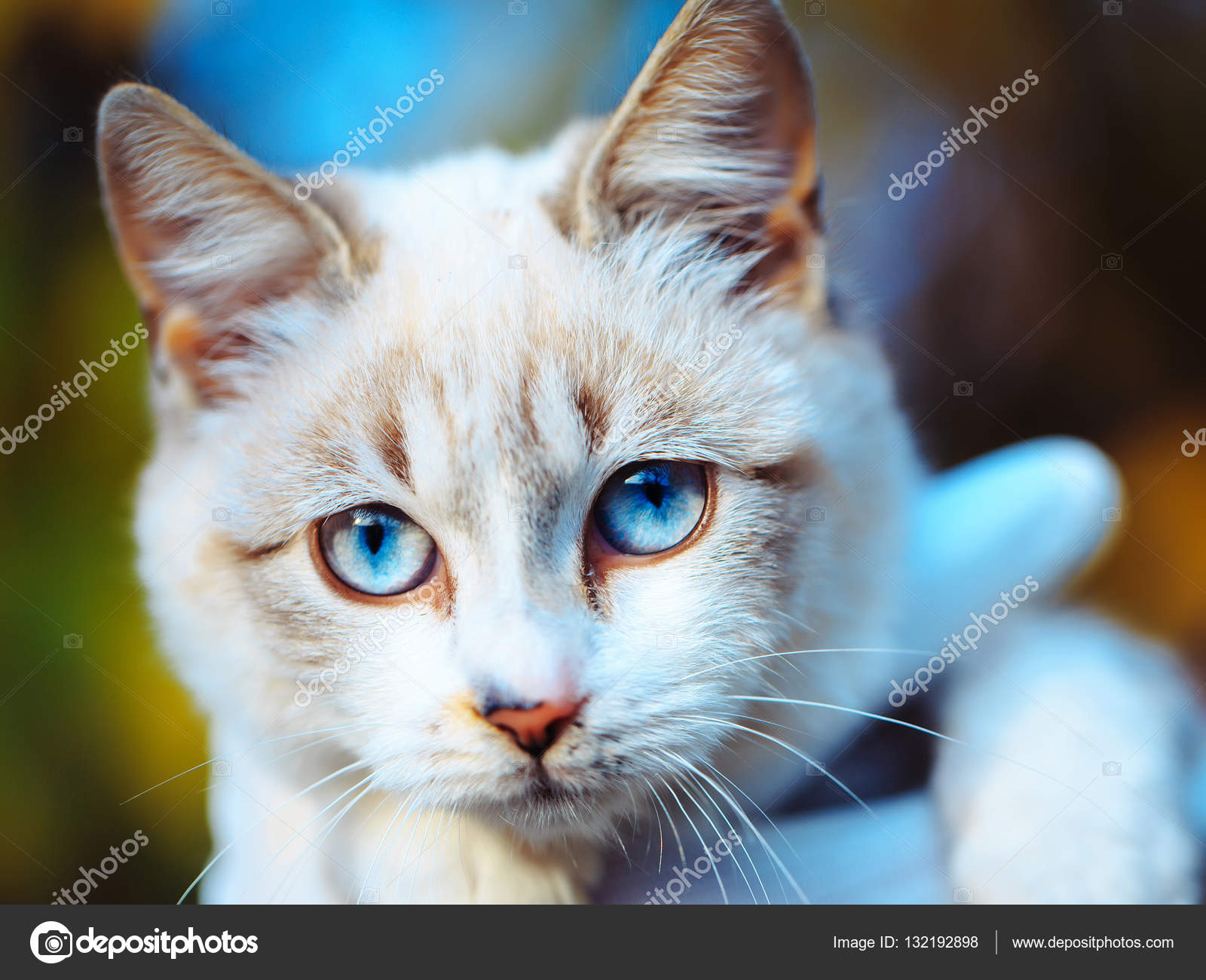 cute cat with blue eyes — stock photo © tverdohlib #132192898