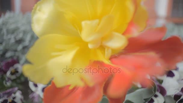 Červená a žlutá květina na pozadí fialové květy
