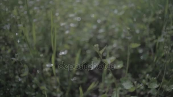 Glade s divoce rostoucí květiny a trávy