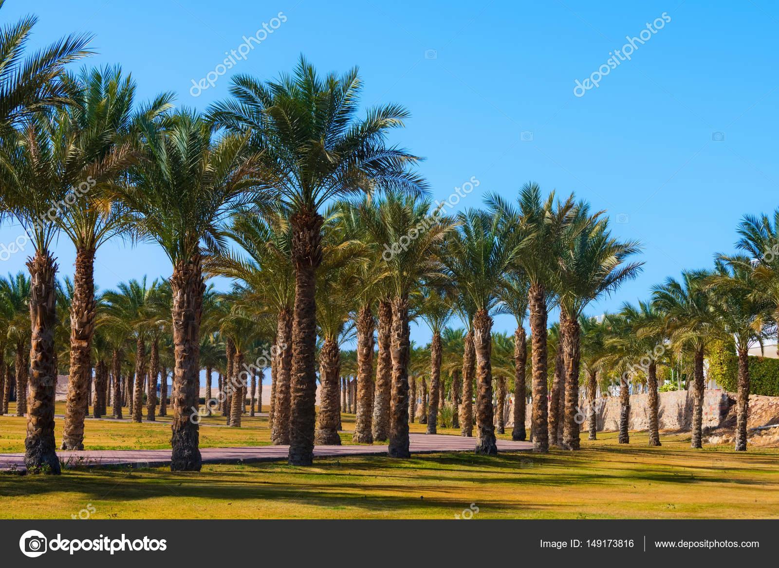 Idyllic tropical palm trees garden — Stock Photo © Tverdohlib.com ...
