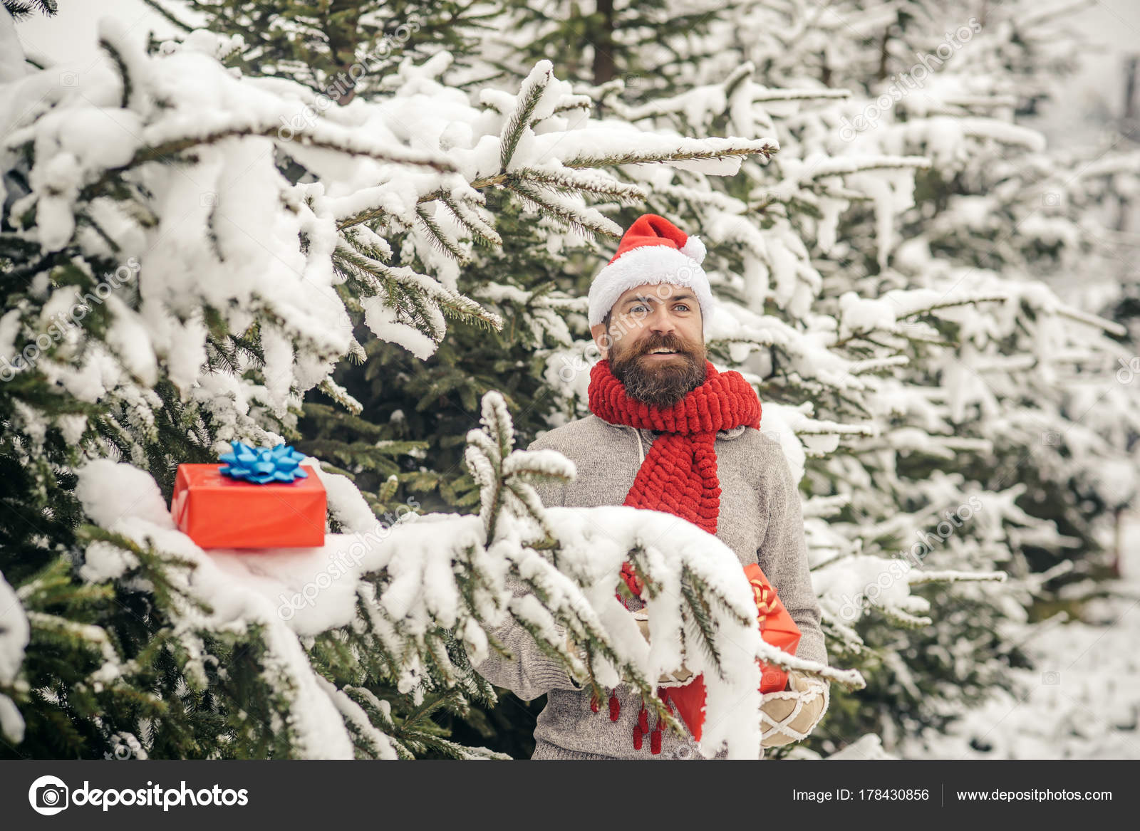 9eba6bfd3c5 Hipster santa at Christmas tree in snowy winter forest. Bearded man in santa  hat at new year. Christmas happy man with beard hold present box.
