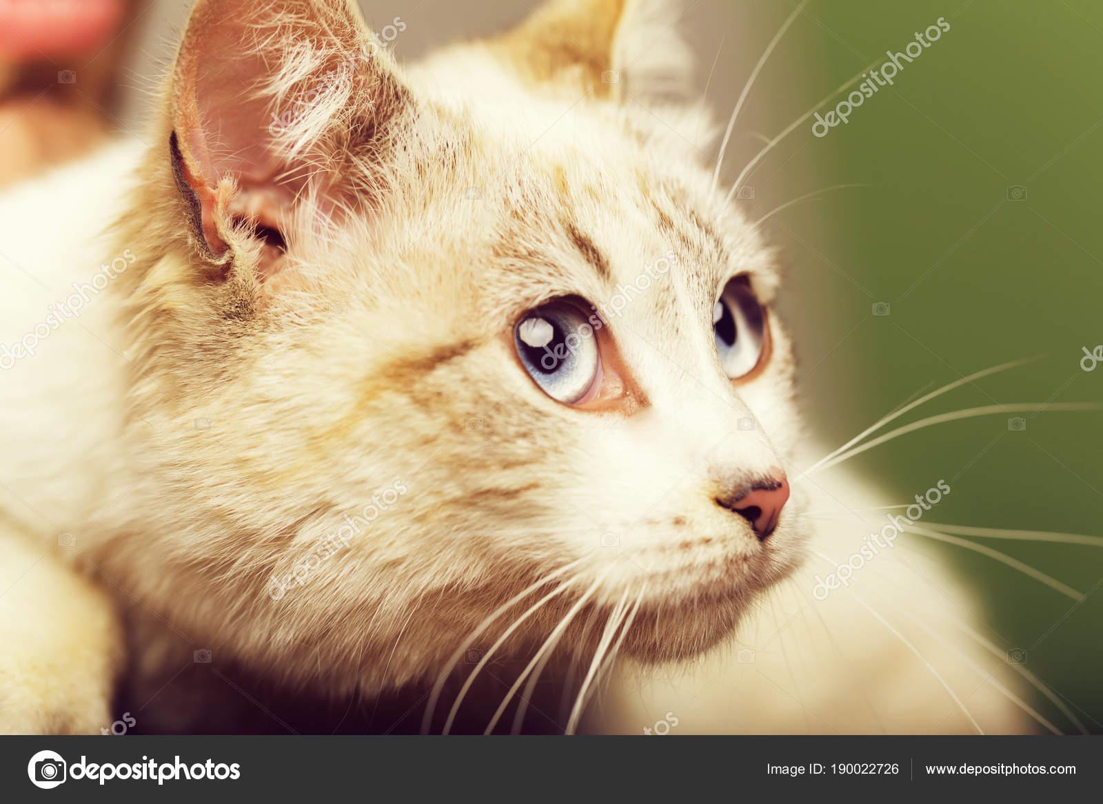 Kot Z Wielkie Oczy Zdjęcie Stockowe Tverdohlibcom 190022726