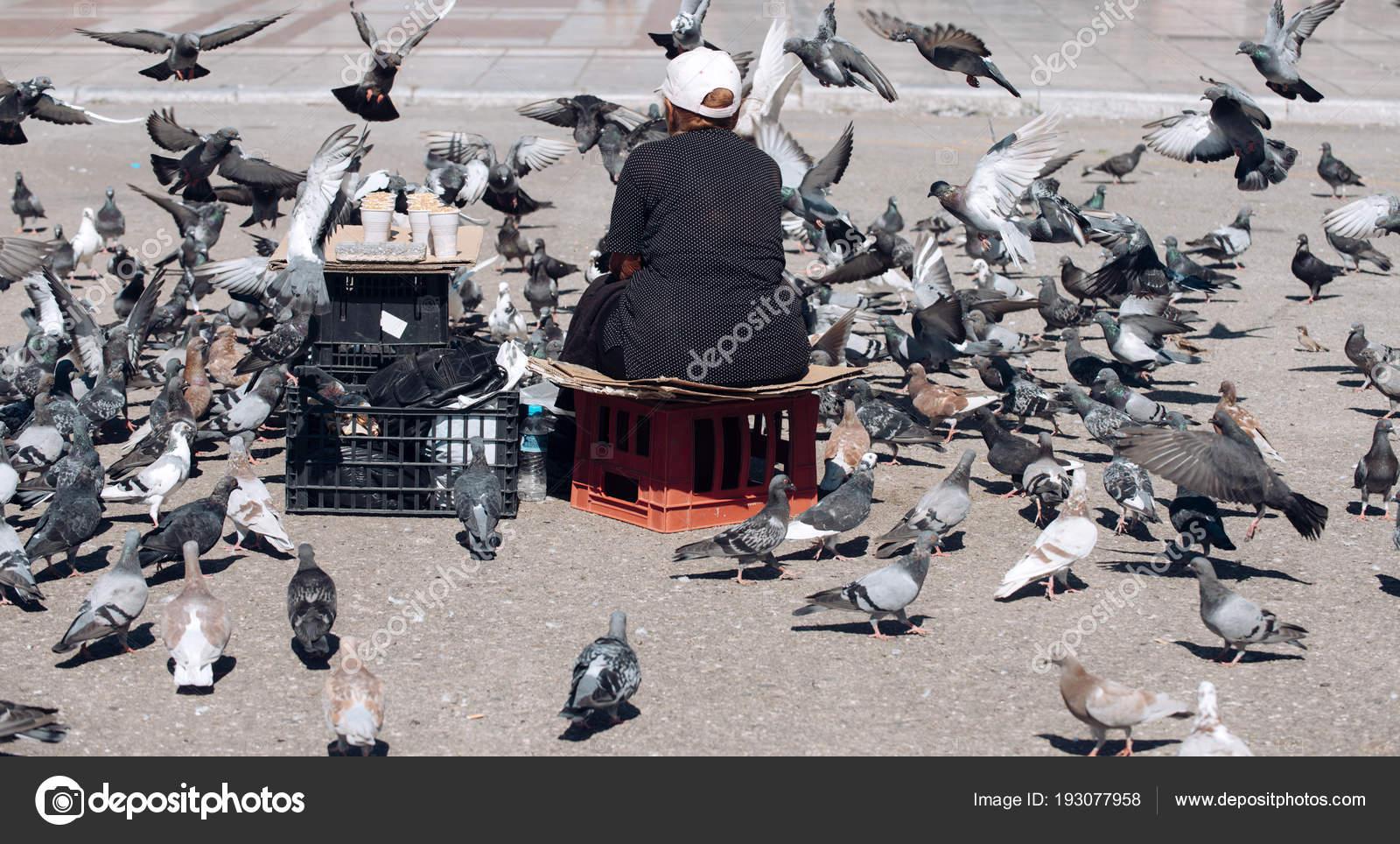 Starší velké ptáky