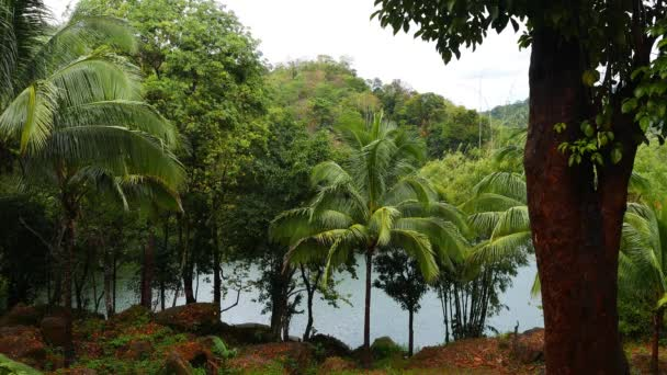 A clip from Siaton tropical forests surrounding Lake Balanan, under the rain.