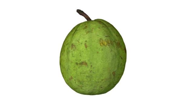 Realistické vykreslení rotující guava na bílém pozadí. Video je bezproblémově opakování a 3d objektu je snímán z oblíbené ovoce