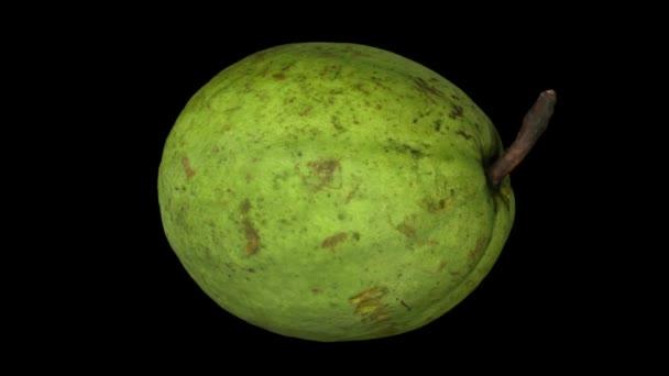 Realistické vykreslení rotující guava na černém pozadí. Video je bezproblémově opakování a 3d objektu je snímán z oblíbené ovoce