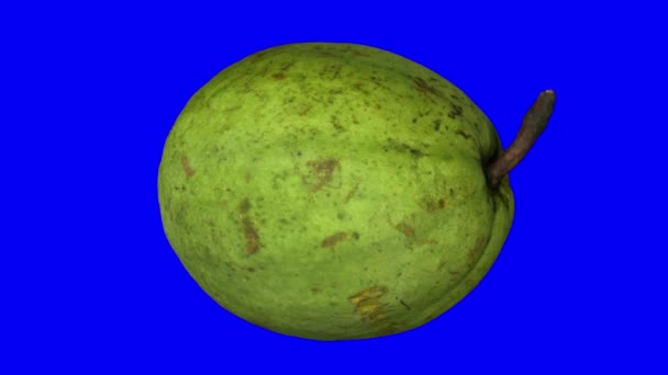 Realistické vykreslení rotující guava na modrém pozadí. Video je bezproblémově opakování a 3d objektu je snímán z oblíbené ovoce
