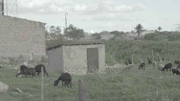 Pohled z koz - Brazílie