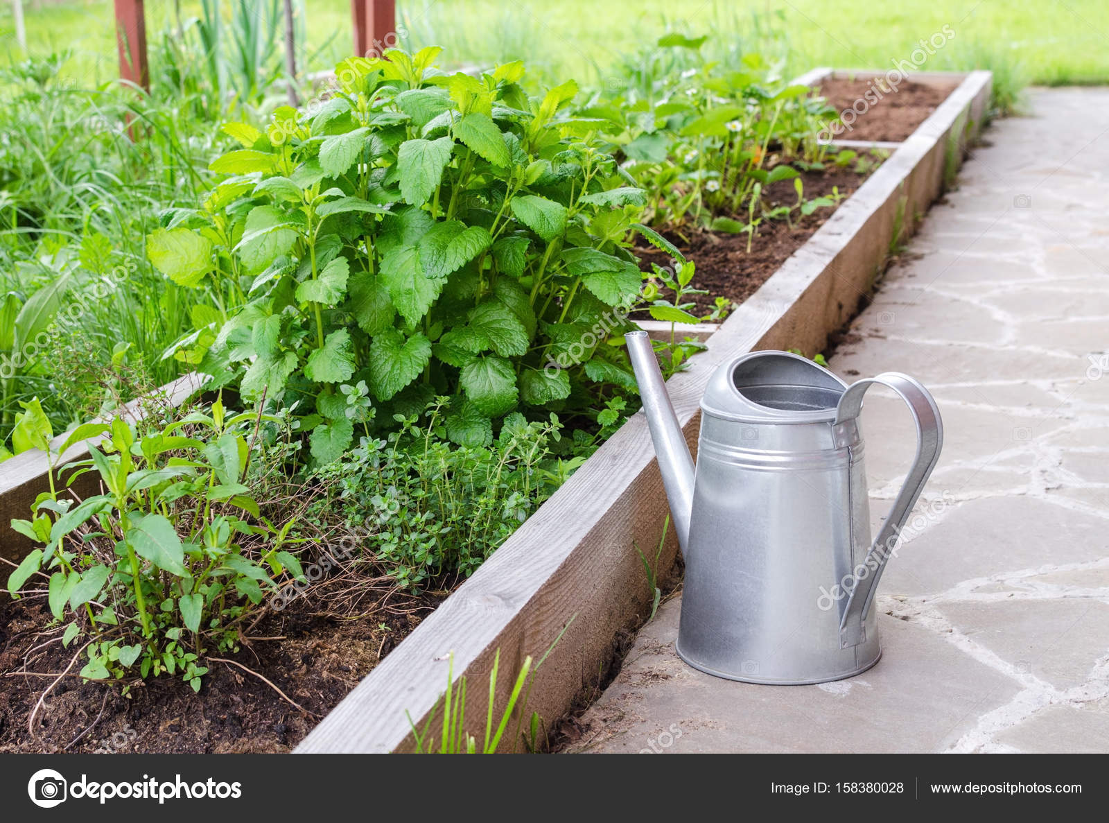 Kleine Kräuter Gießkanne Garten Und Metall Garten Bett Mit Minze