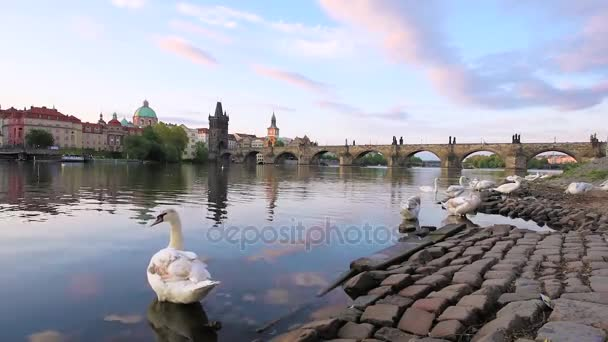 Kouzelné krásnou krajinu s bílé labutě na Vltavě u Karlova mostu na starém městě Praze, Česká republika.