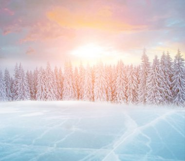 Beautiful winter landscape with ice-lake and snow-covered fir-tr