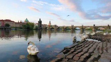 Kouzelné krásnou krajinu s bílé labutě na Vltavě u Karlova mostu na starém městě Praze, Česká republika