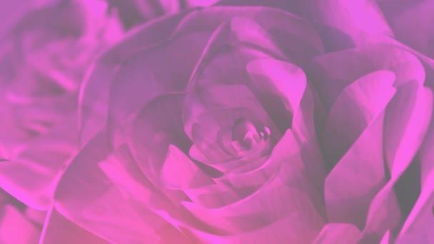 rotating pink roses background theme - 3D render. seamless loop