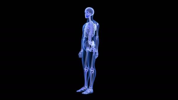 Dolor en las articulaciones. Azul cuerpo humano Anatomía 3d render ...
