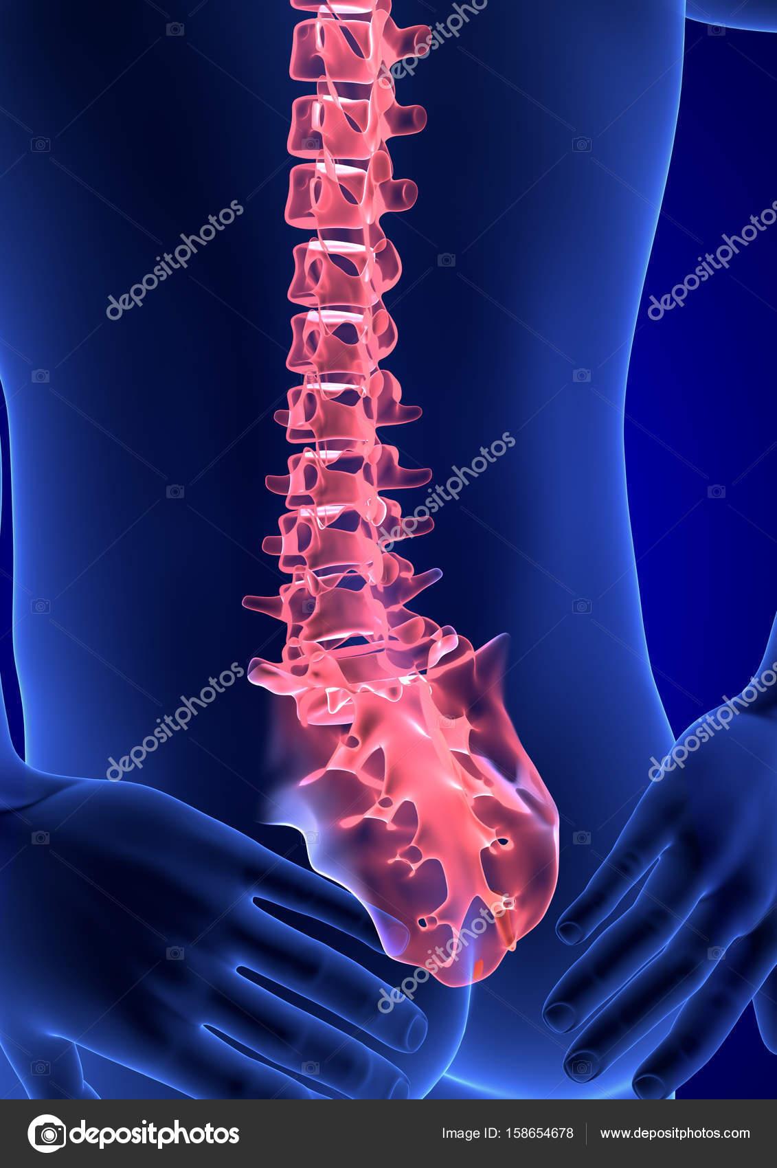 Wirbelsäule Schmerzen. Menschliche Anatomie Körper blau 3d Render ...
