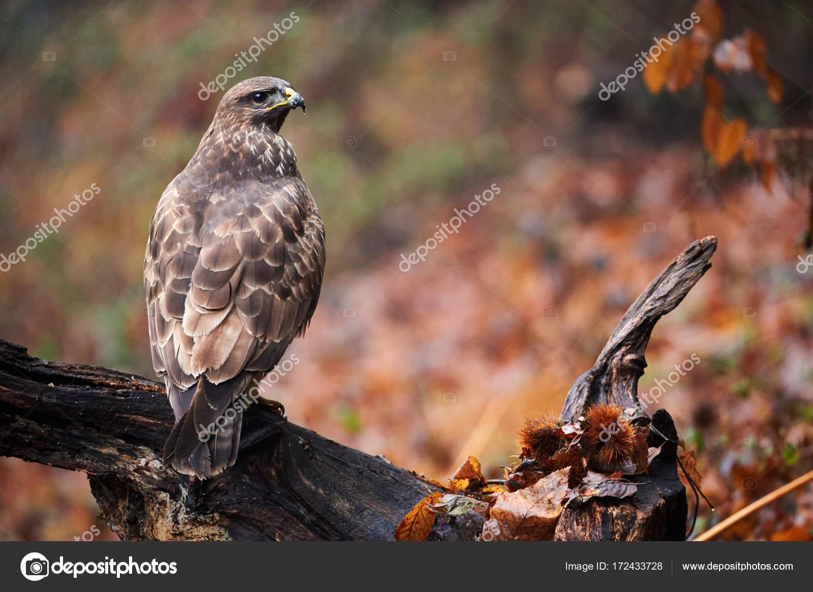 Μεγάλη λεία σε ένα πουλί
