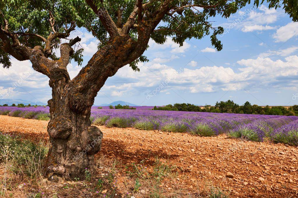 Beautiful landscape of Provence