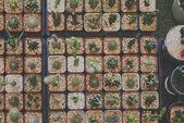 Kaktuszok gyűjtemény háttér