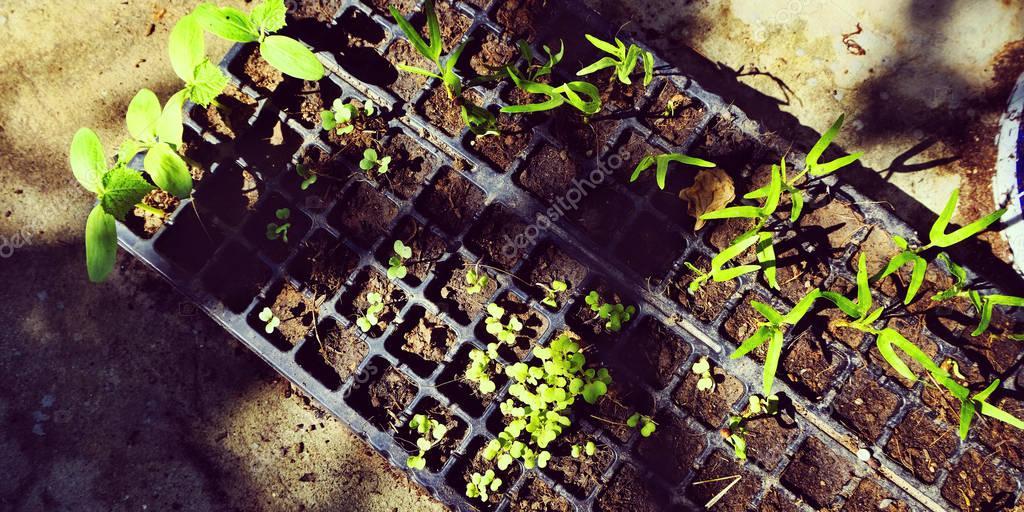 green plants for gardening