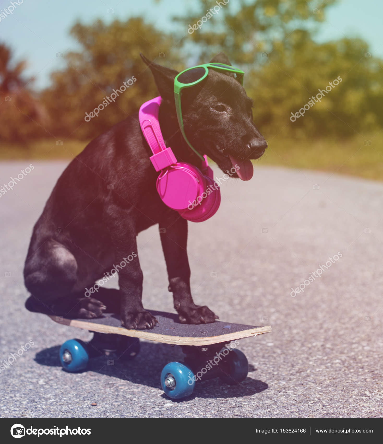 Street Dog And Skate Board Stock Photo Rawpixel 153624166