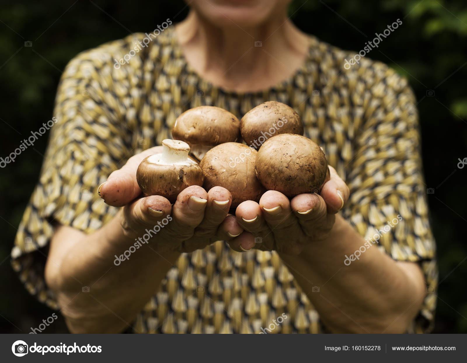 Женские руки с грибами — стоковое фото