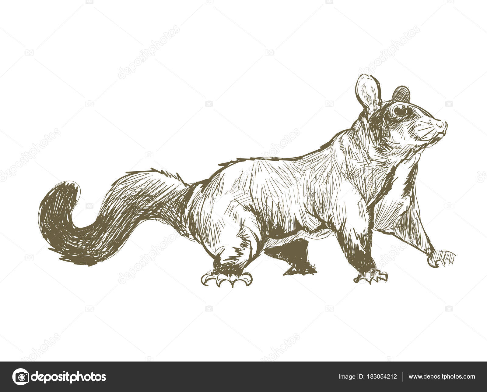Line Drawing Rat : Illustration drawing style rat u2014 stock photo © rawpixel #183054212