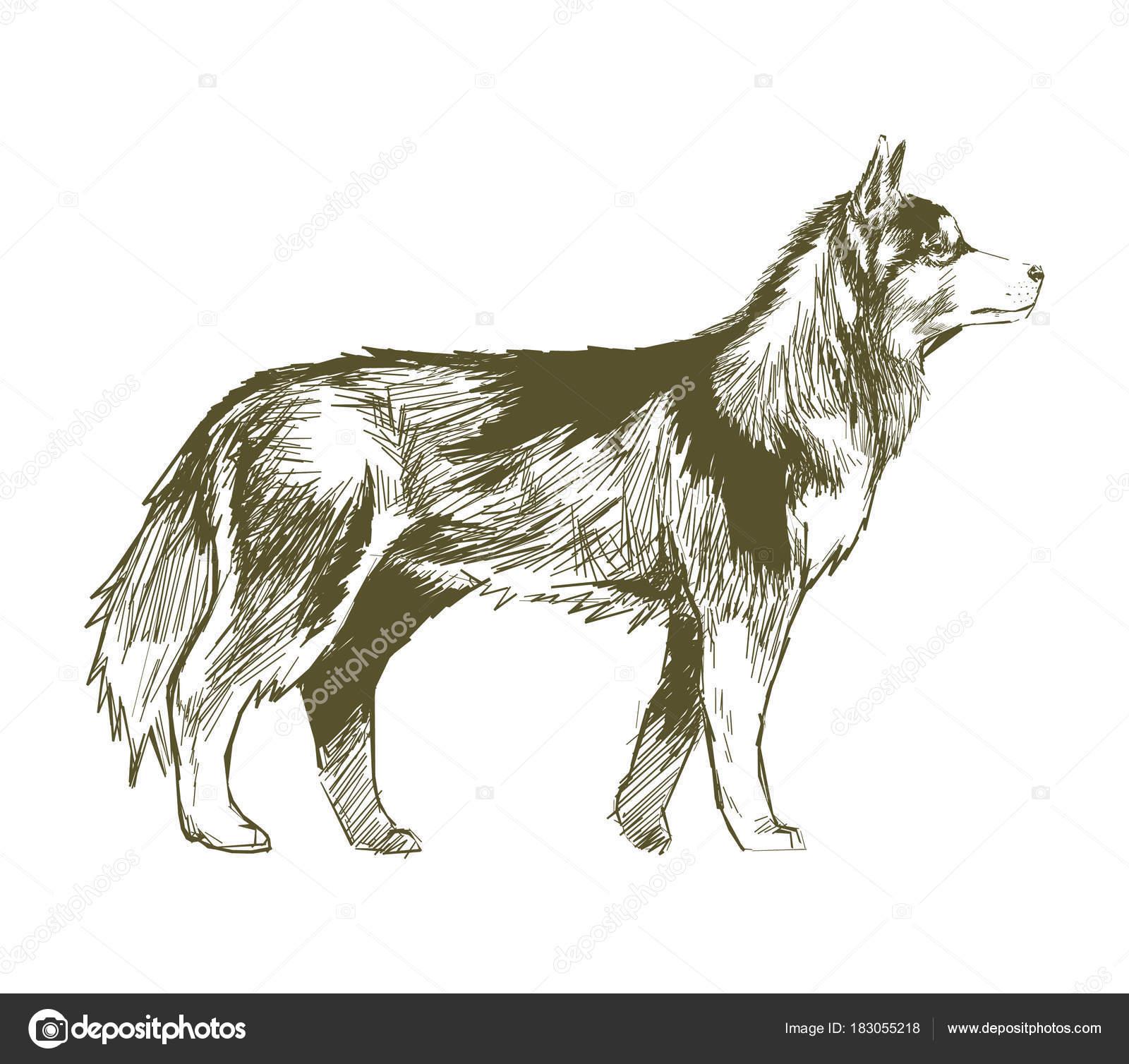 犬のイラストの描き方 ストック写真 Rawpixel 183055218