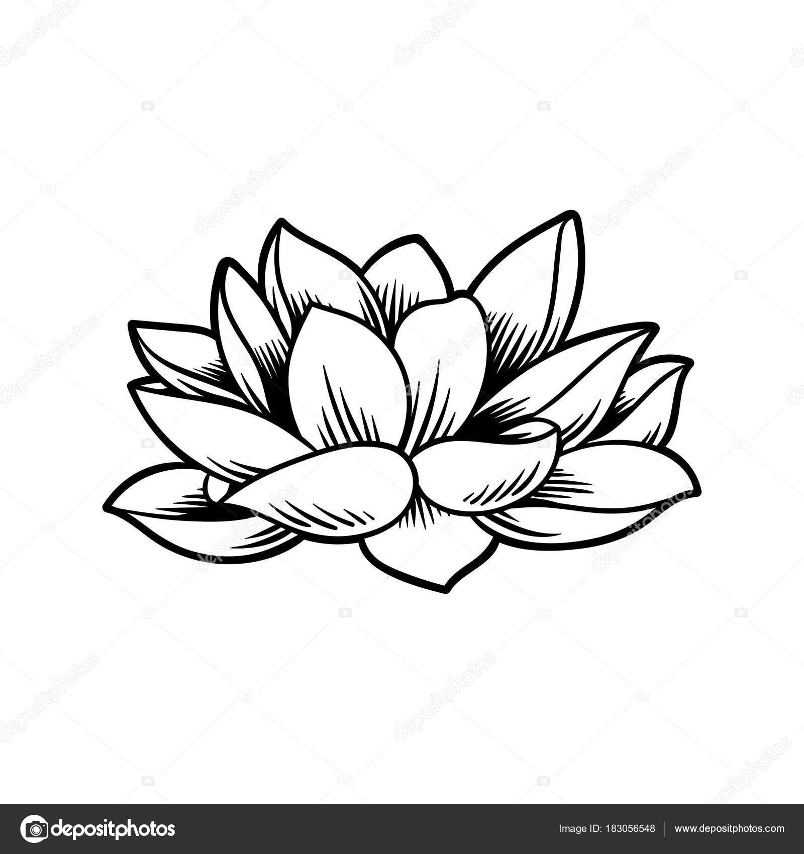 Dibujos Flores Japonesas Diseño Ilustración Estilo Tradición