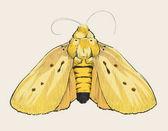 Fényképek Ábra rajz stílust pillangó