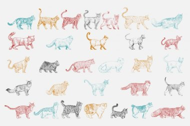 Illustration drawing style of cats breeds collection