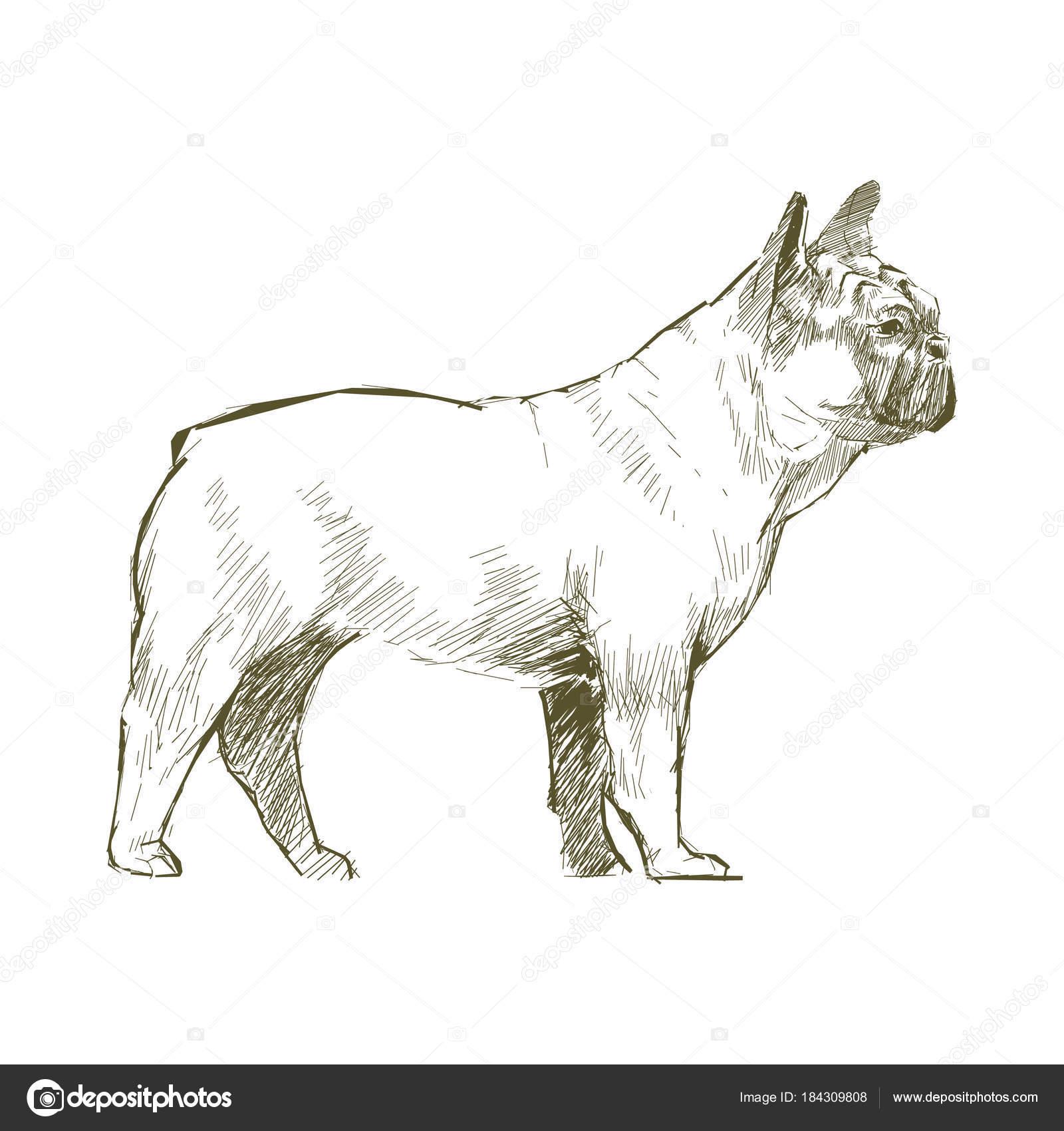 犬のイラストの描き方 ストック写真 Rawpixel 184309808