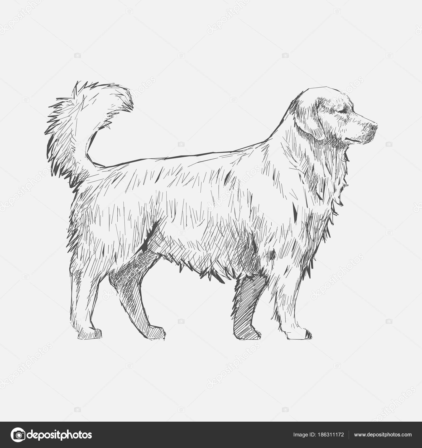 犬のイラストの描き方 ストック写真 Rawpixel 186311172