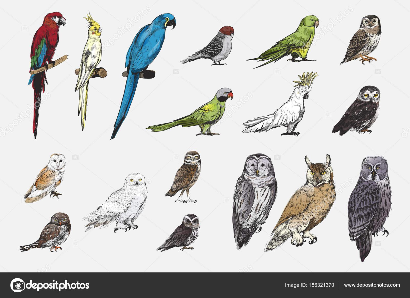 zdarma fotky velkých ptáků www big teets com
