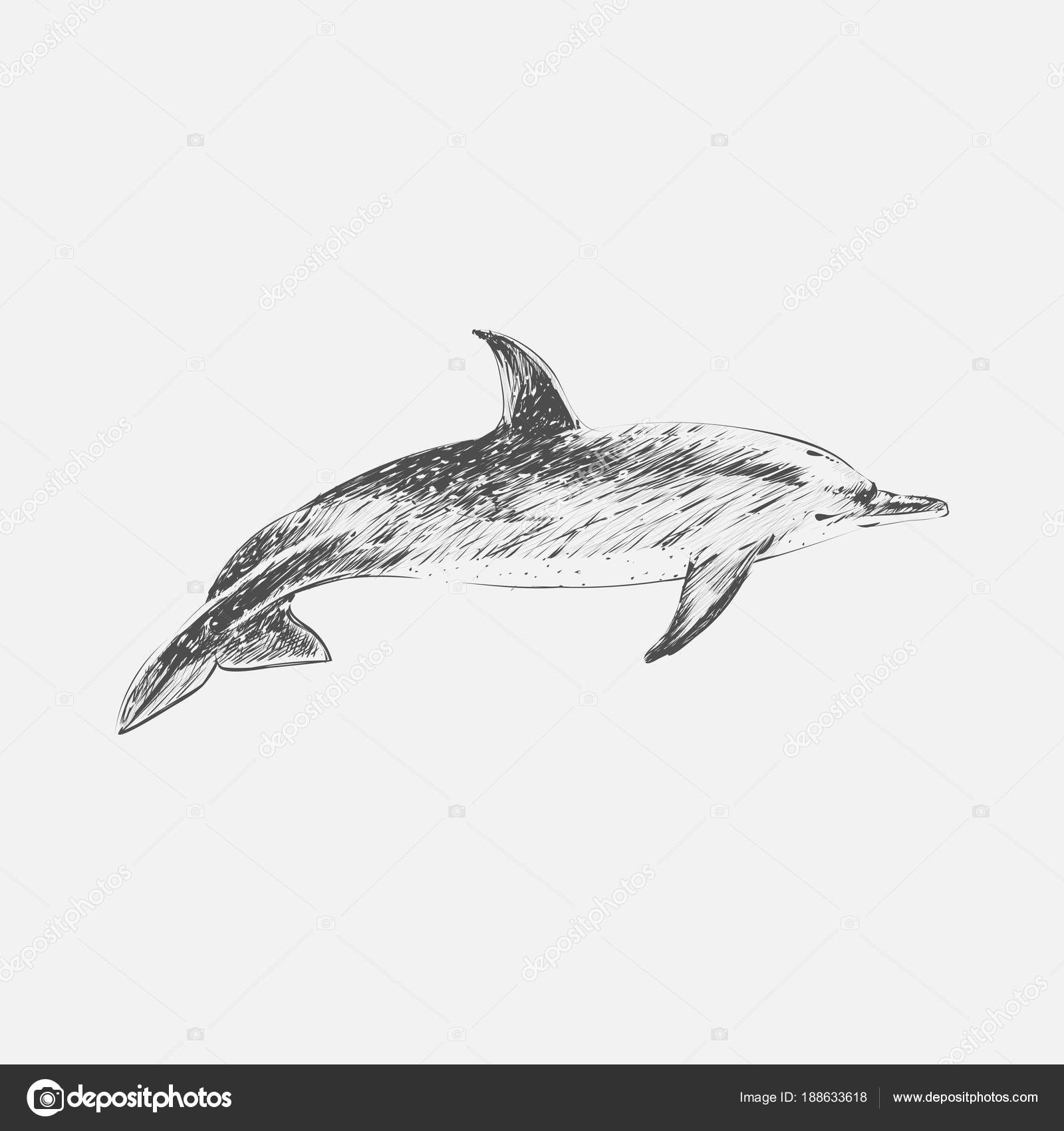 Illustration Drawing Style Atlantic Dotted Dolphin — Stock Photo ...