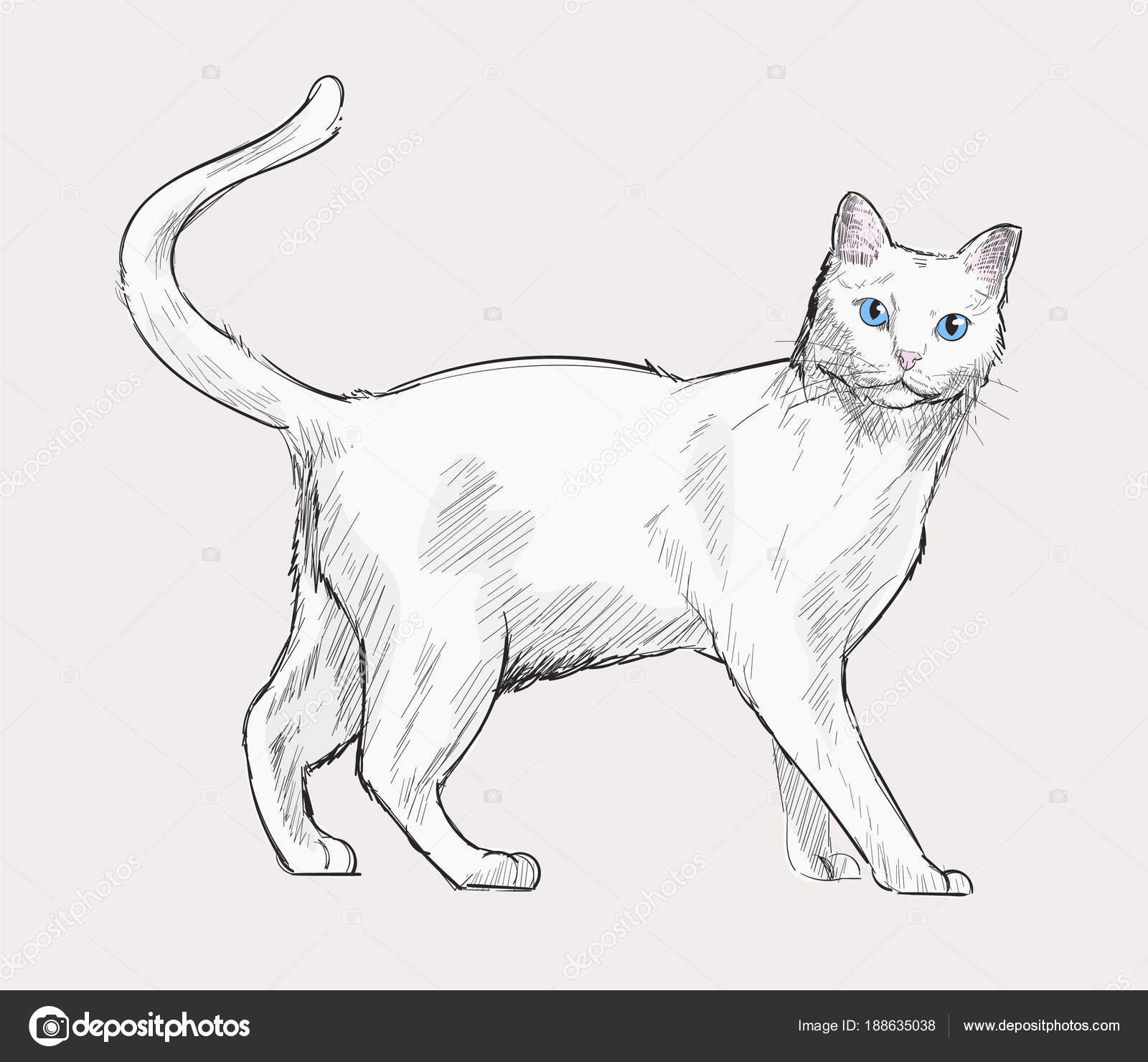 Stile Disegno Illustrazione Del Gatto Foto Stock C Rawpixel 188635038