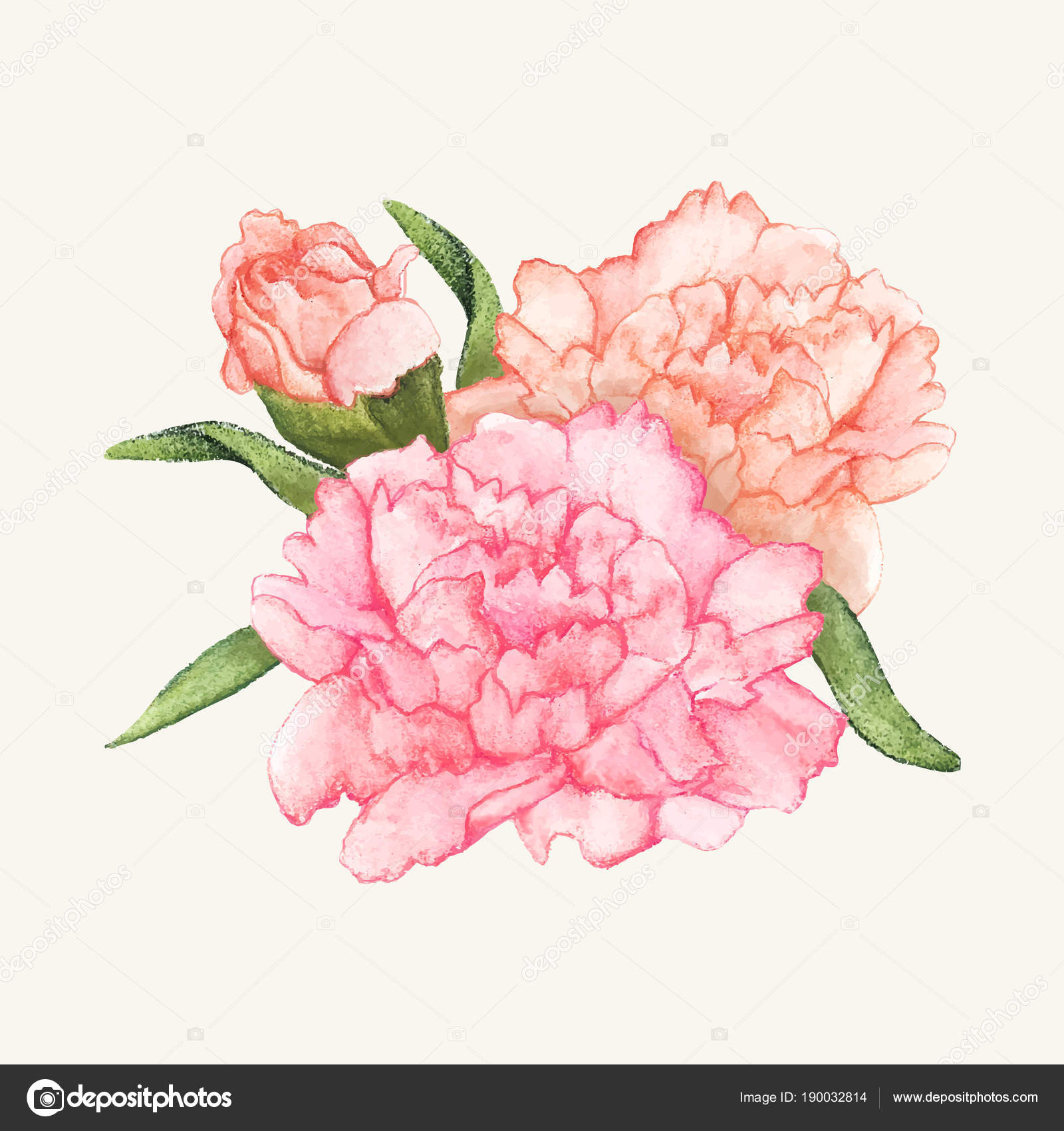 Carnation birth flower coloring page | Flower coloring pages ... | 1700x1600
