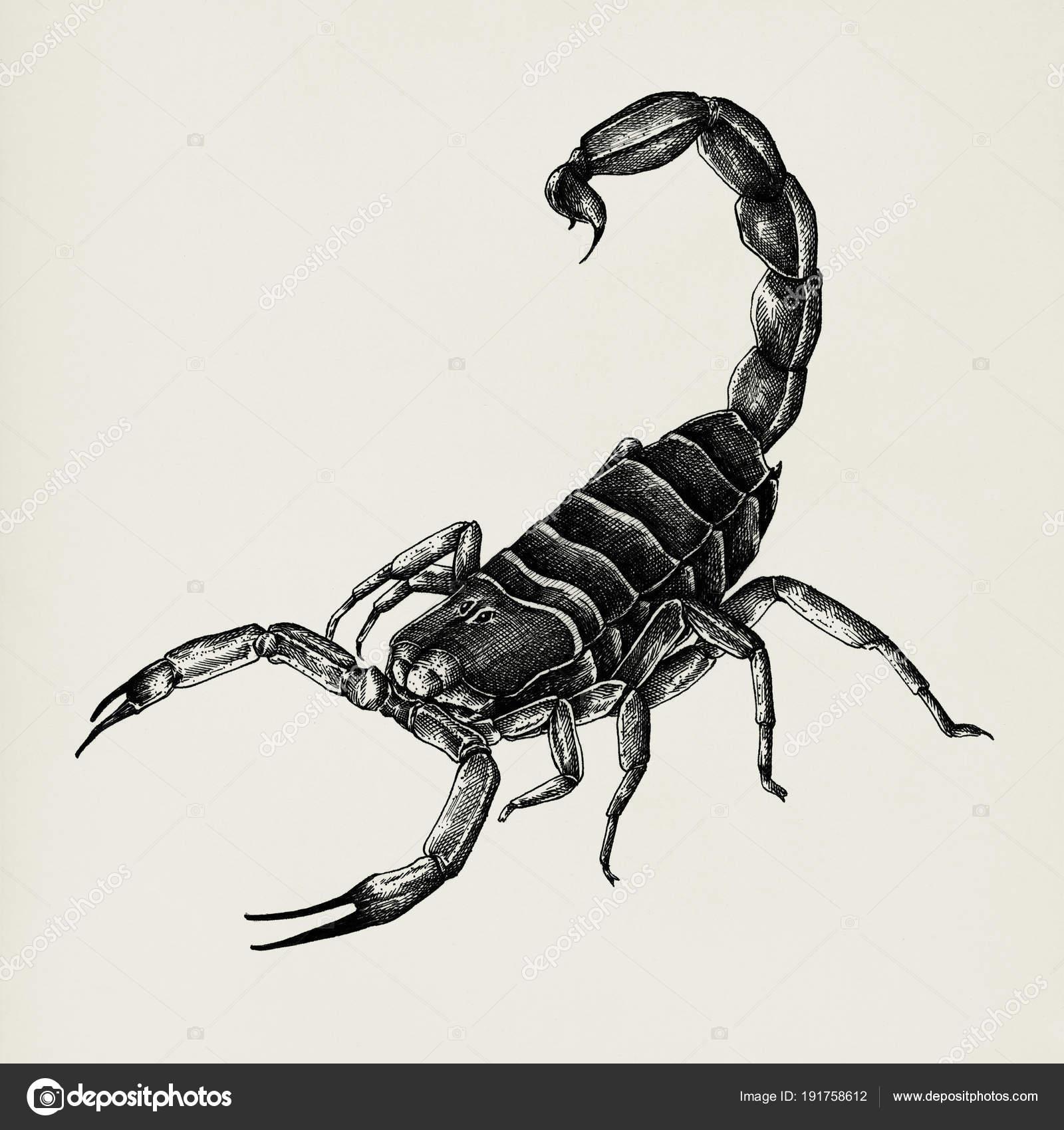 Hand Gezeichnet Skorpion Auf Hintergrund Isoliert Stockfoto