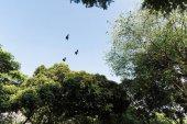a kék égen repülő madarak