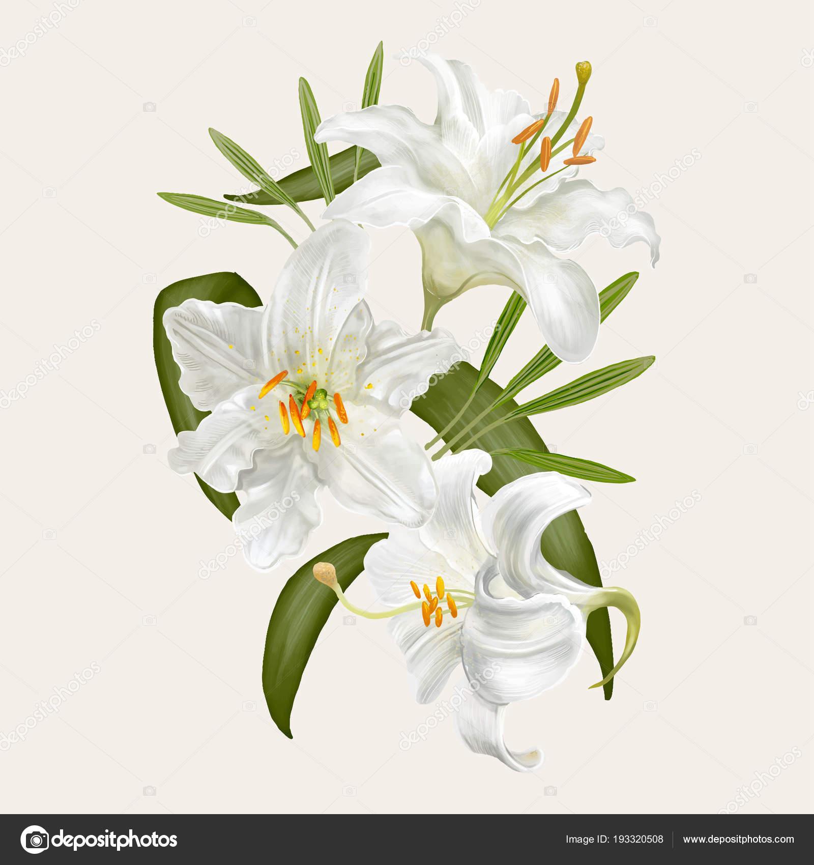 Illustration Dessin Fleurs Lys Photographie Rawpixel C 193320508
