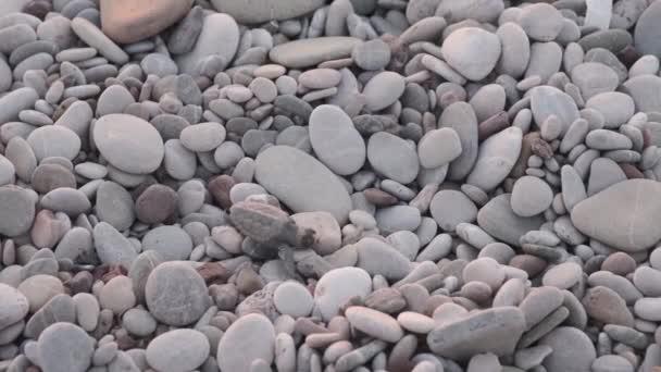 Želva uvízlá v kamenech je želva plazící se po kamenech k moři při zachování želv na pláži Cirali, Antalya, Turecko při západu slunce Cesta malé želvy k oceánu. Přirozené instinkty mořských živočichů. Malá želva opouští hnízdo a plíží se do moře