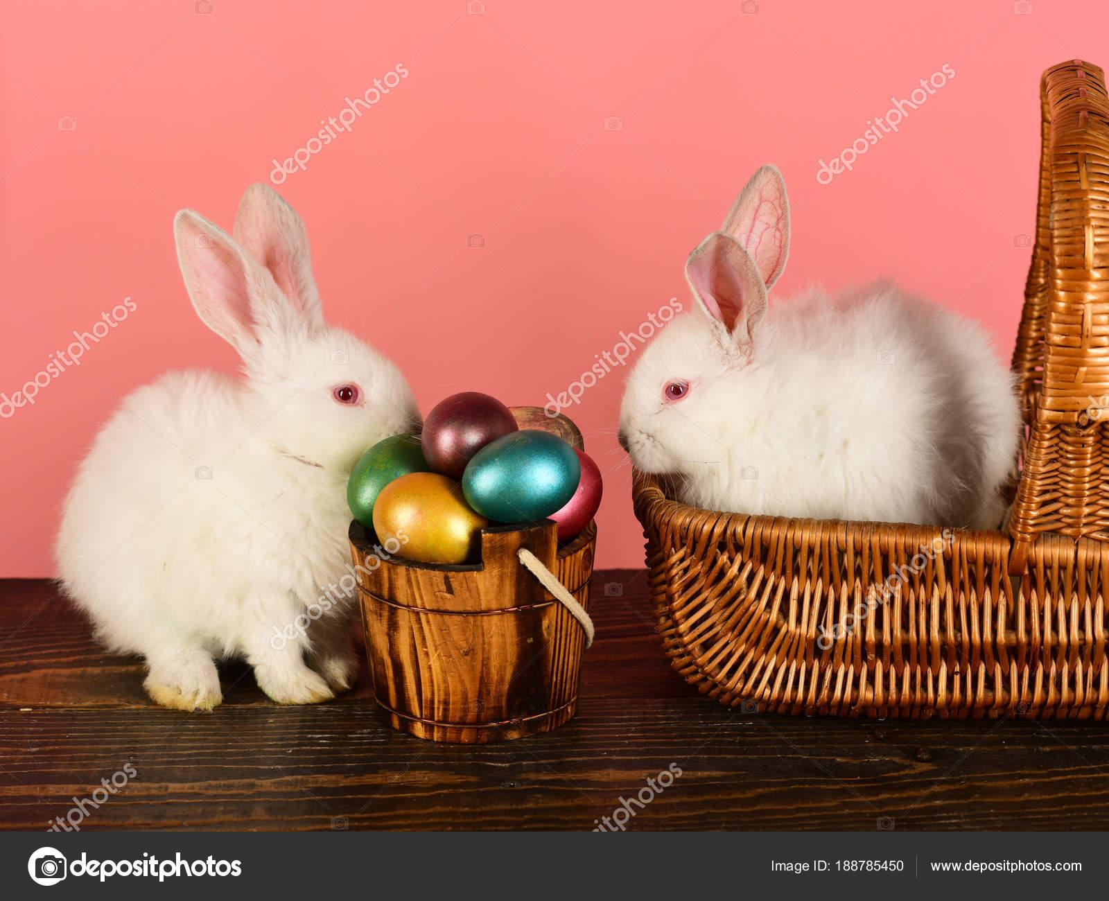 Best Happy Easter Ideas For Happy Family Easter Egg Easter Egg