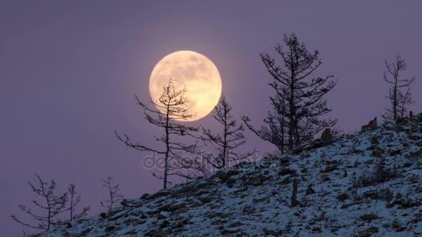 Noční čas zanikla velké plné jasný měsíc stoupá z kopce do nebe