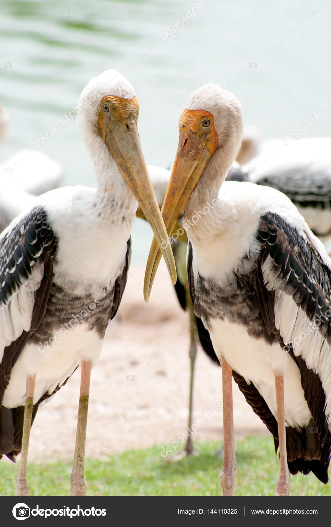 Ινδικό μεγάλο πουλί εικόνες