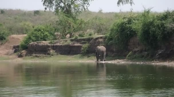 Elephant on Kazinga Channel, Queen Elizabeth National Park, Uganda