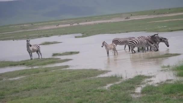 Zebra ivóvíz medence
