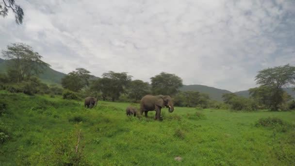 Elefántok mezőben, Ngorongoro kráter, 4k