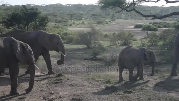 Rugdossa, por, Serengeti elefántok
