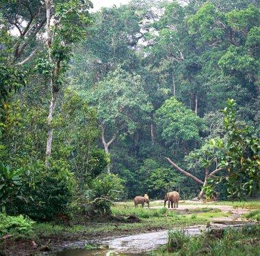 elephants grazing on meadow in rainforest
