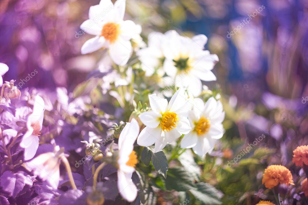 Beautiful flowers made with soft filter. Selective soft focus on the closest flower.