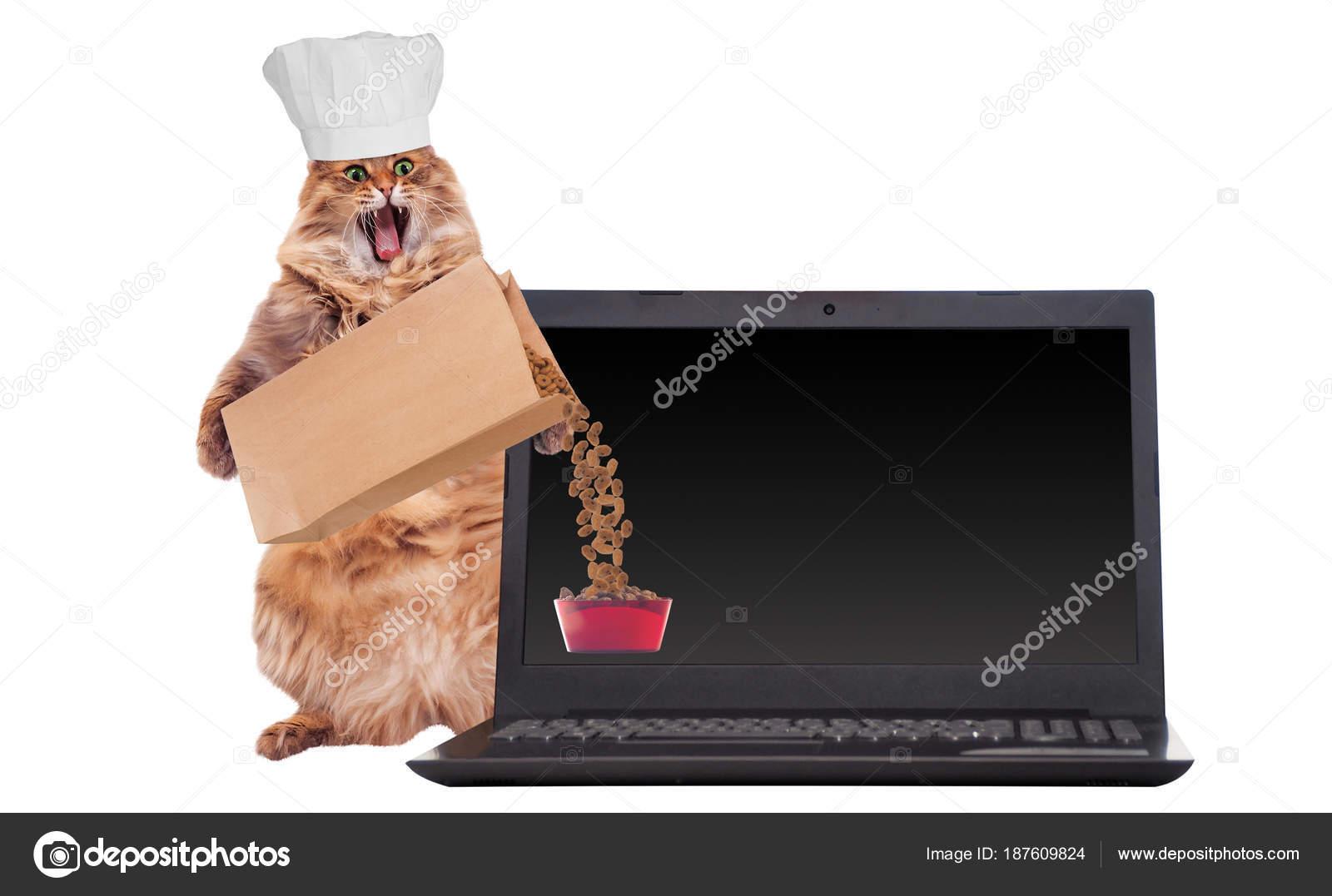 velká chlupatá kočička fotka 3D porno otroctví
